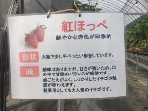 京都 イチゴ狩り